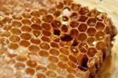 honeycomb-3-1156751-639x430